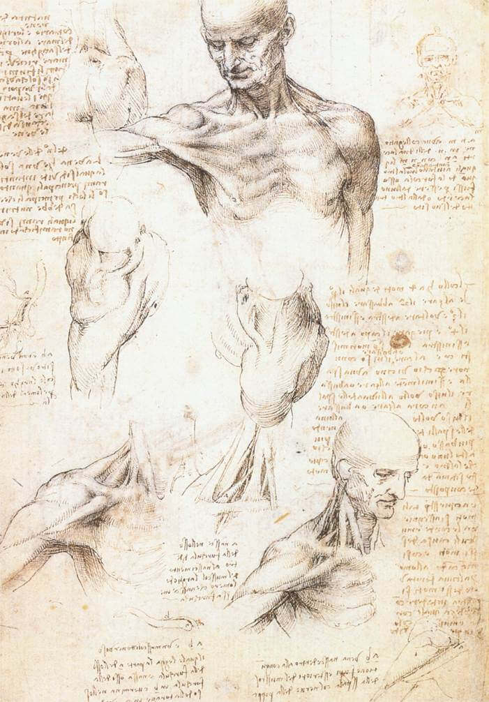 Anatomical studies of a male shoulder - by Leonardo da Vinci