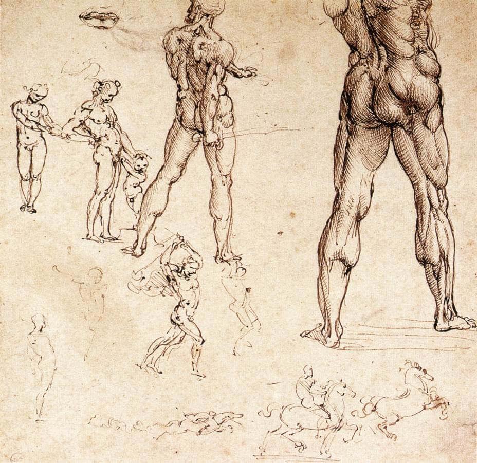 Anatomical studies - by Leonardo da Vinci