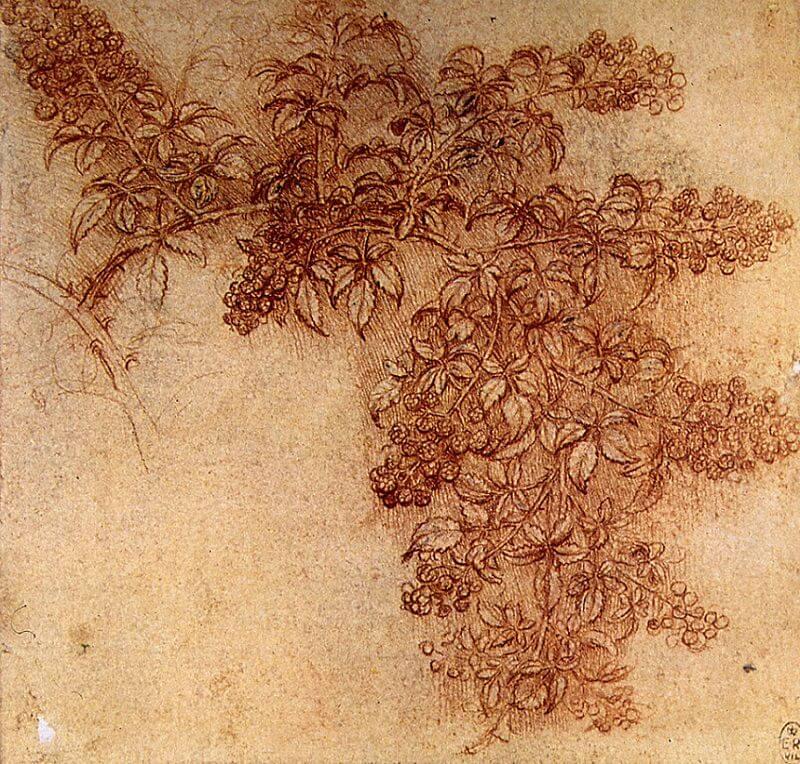 Leonardo Da Vinci Facts  Cool Kid Facts