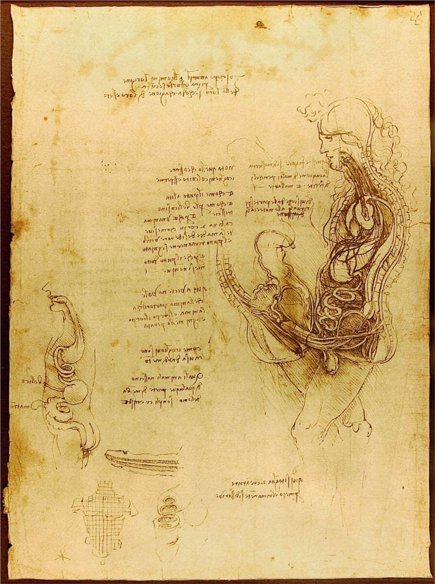 Coition of a hemisected man and woman - by Leonardo da Vinci