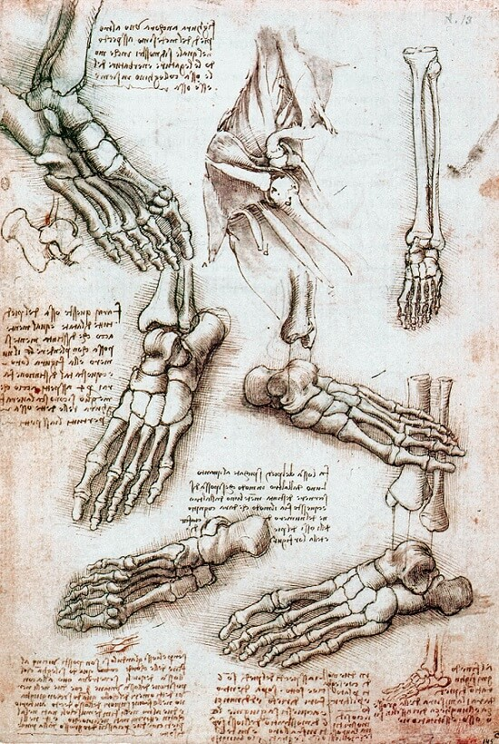 Skeleton Foot - by Leonardo da Vinci
