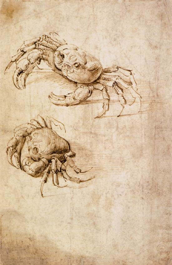 Studies of crabs - by Leonardo da Vinci