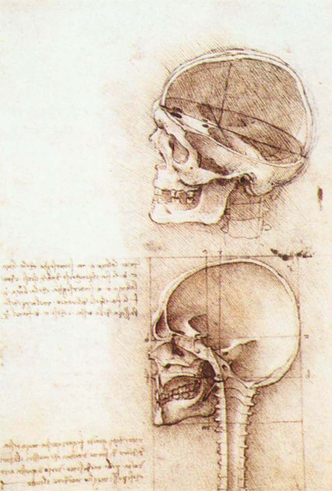 Studies of human skull - by Leonardo da Vinci