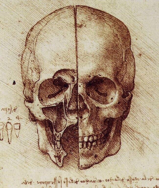 The Skull By Leonardo Da Vinci