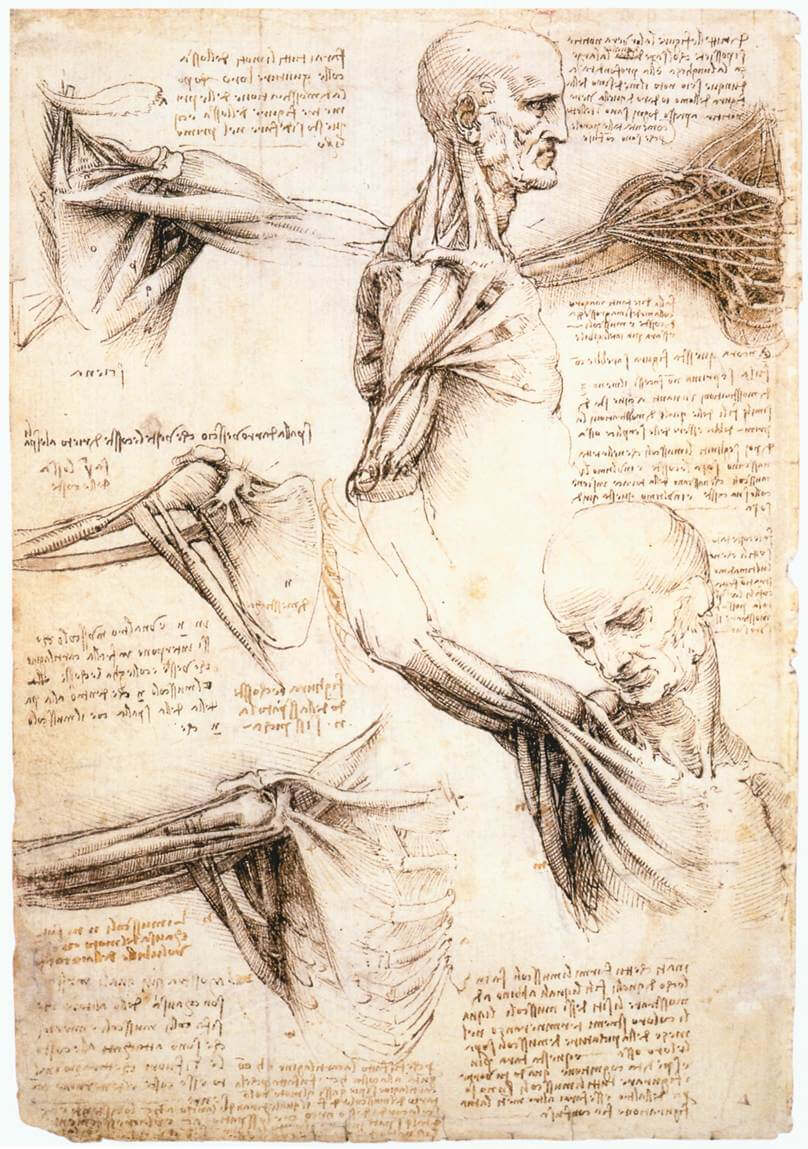 Anatomical studies of the shoulder - by Leonardo da Vinci